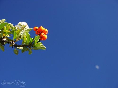 Flores e frutos