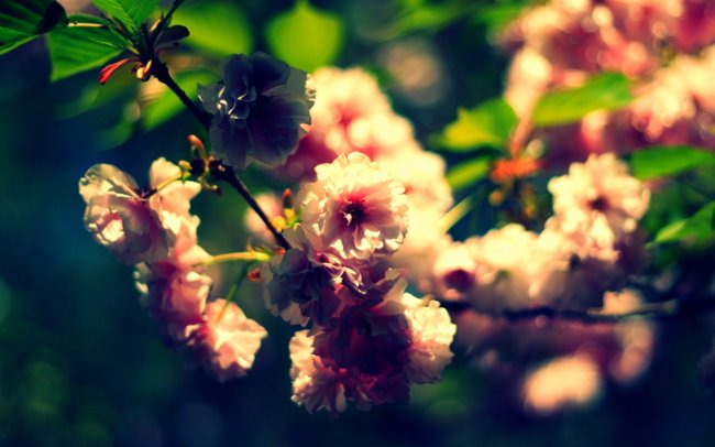 The Cherry Blossoms are pretty epic.