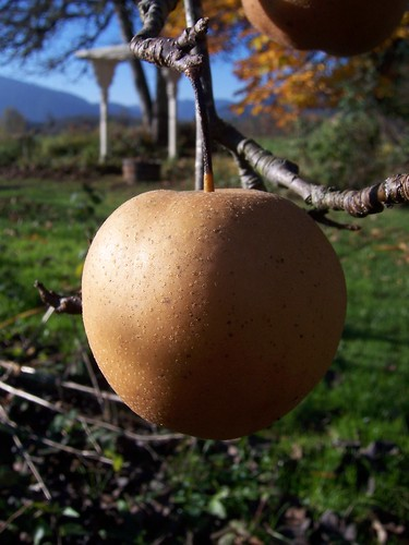 Lone Autumn Apple