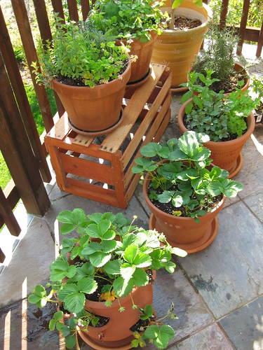 container garden on the patio