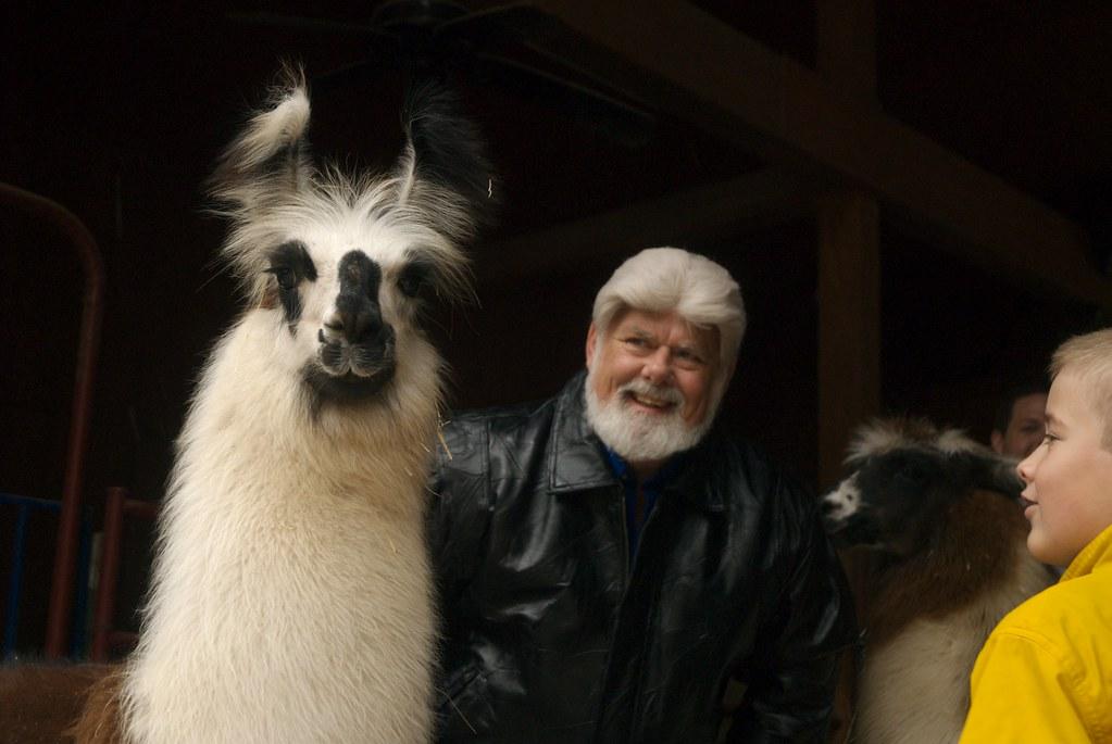 A very llama Thanksgiving