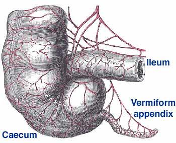 appendix.jpg