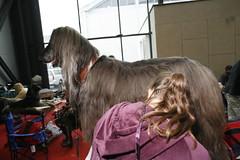 Dog fair in Ljubljana