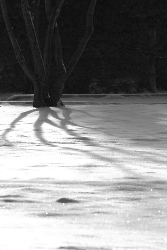 tree shadow 4