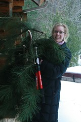 Gathering Branches for Christmas Decor