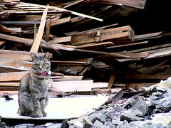 A cat and destroyed house