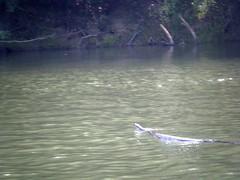 Saluda River Paddle-19