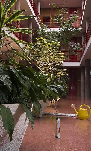 raquel espacio jardin
