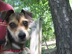 Goofy looking Alvin