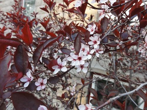 039/365 Flowering bush