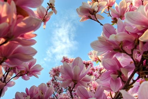 Start of spring in East Lansing, Michigan