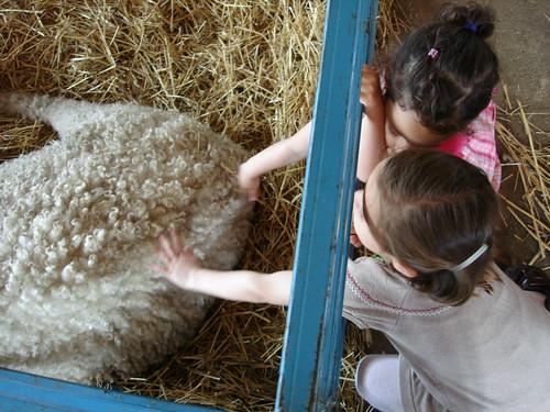 Petting the wool
