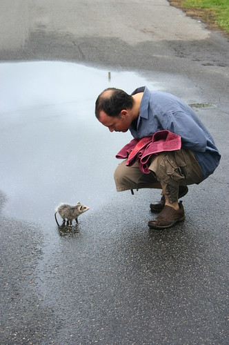 Baby Opossum - with Ryan