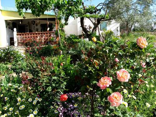 mediterranean garden by Marlis1.