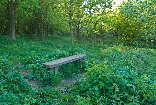 Wilstead Wood, Bedfordshire _G103909