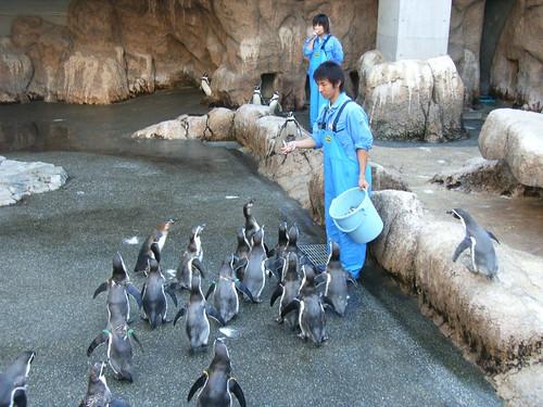 企鵝們的愉快下午茶
