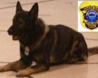 Officer Pocket, one of the K9 officers that may be euthanized