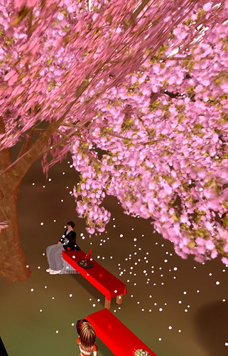 Taku Raymaker beneath the cherry blossoms