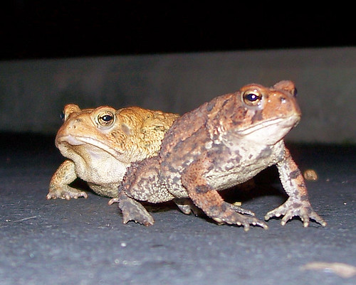 toads together.jpg
