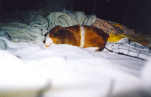 mario sleeping in my bed