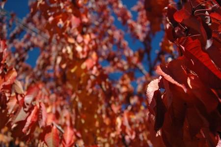 Un árbol de hojas rojas
