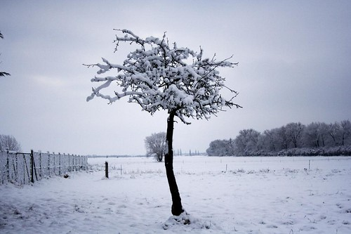 Lil' winter tree