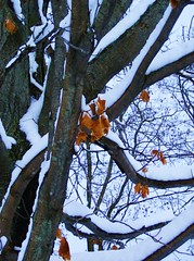 Optimistic Leaves (winter edition)
