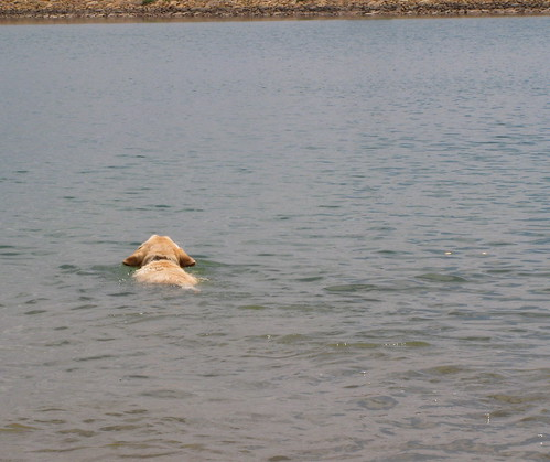 Sadie swims for treats