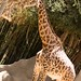 San Diego Zoo 065