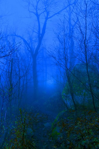 Dawns Trail