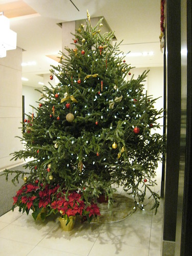 live christmas tree in my lobby