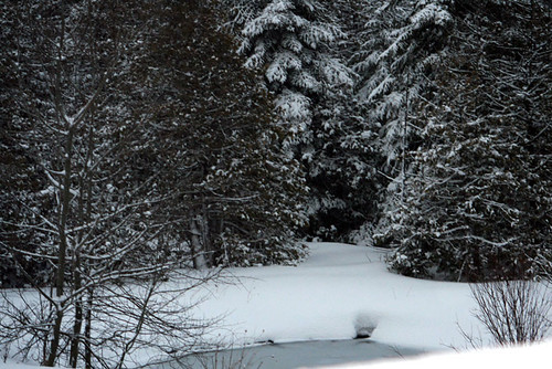 Pond view, from back deck