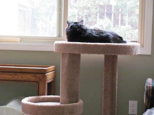Katie's new cat tree!