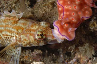 2498804871 0e268f487a o Criaturas inacreditáveis do fundo do mar