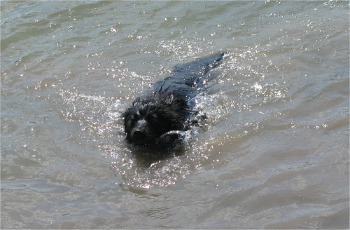 Lizzie loves to swim!