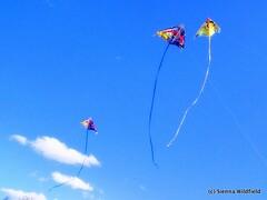 Outdoor Adventures - Kite Flying-3