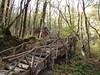 Autumn Scenes In Furolloq Forests