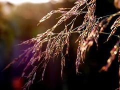 weed under beam of light