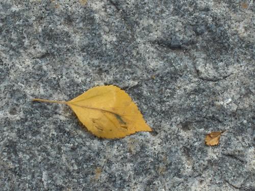Birch Leaf on  marble