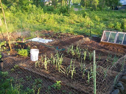 garden is in