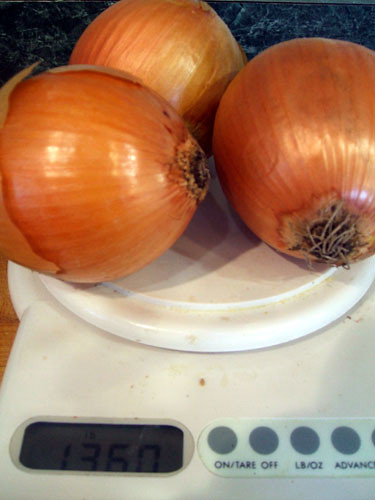Onions on Scale