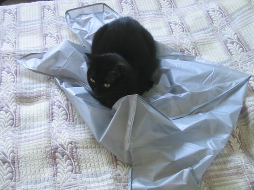 Cat nesting