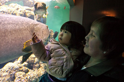 Nana and Phoebe at the Aquarium
