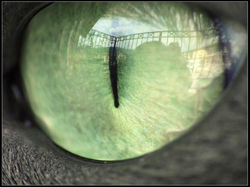 | Pitagora's eye #4 |