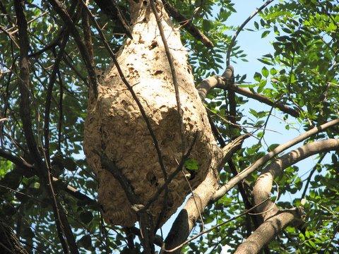 wasp's nest century club 091207