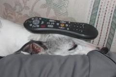 Brian's new remote control holder