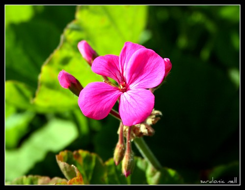 It's That Pink Flower Again