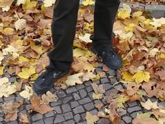 Autumn in Berlin, last year