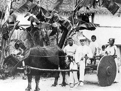 Karabao and Cart
