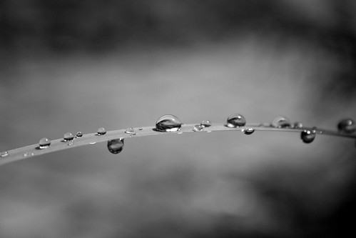 BW Droplets
